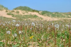 "Even ""weeds"" can grow in the sand"