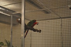 Live parrots in this art exhibition