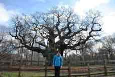 FEBRUARY 2014 - Major Oak, Sherwood Forest