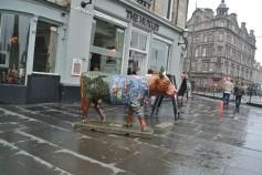 Random Cow