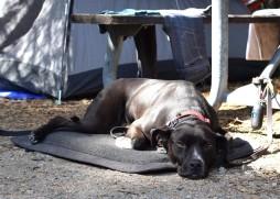 SilverwoodLakeSRA_Camping-36