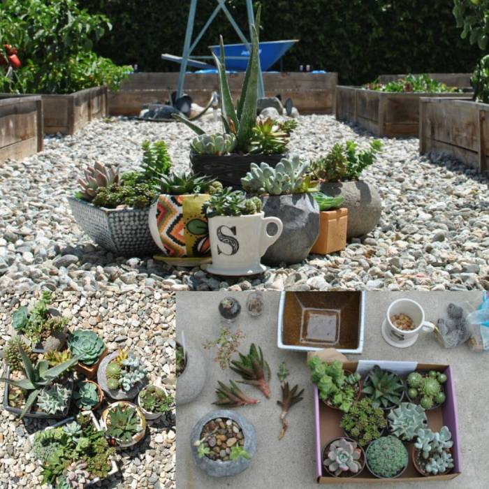 First repotting of these plants in August 2015