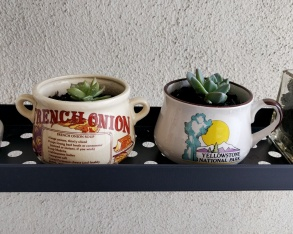 Succulent flower tips stuck in some old mugs from Salvation Army