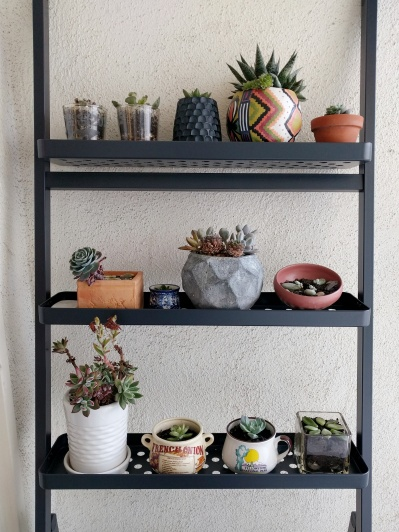 Old and New plants on IKEA plant stand